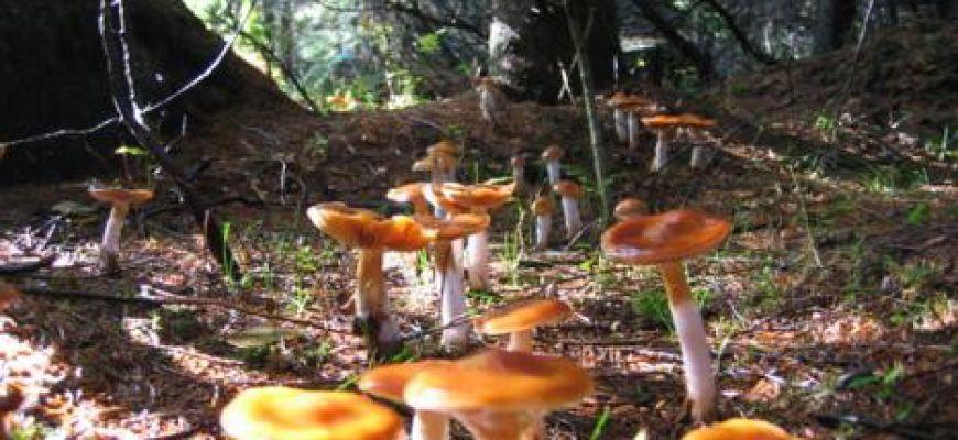 A lezione di micologia lungo i sentieri dell'oasi del Salviano