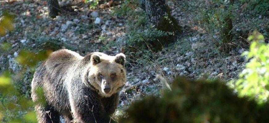 ORSO BRUNO MARSICANO-A ROMA CONVEGNO WWF
