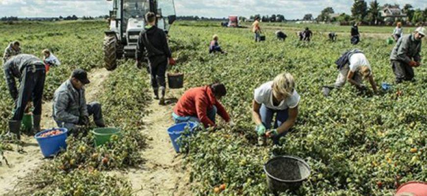 EBAN: in arrivo il nuovo Rapporto dell' Osservatorio Nazionale sul Lavoro Agricolo.