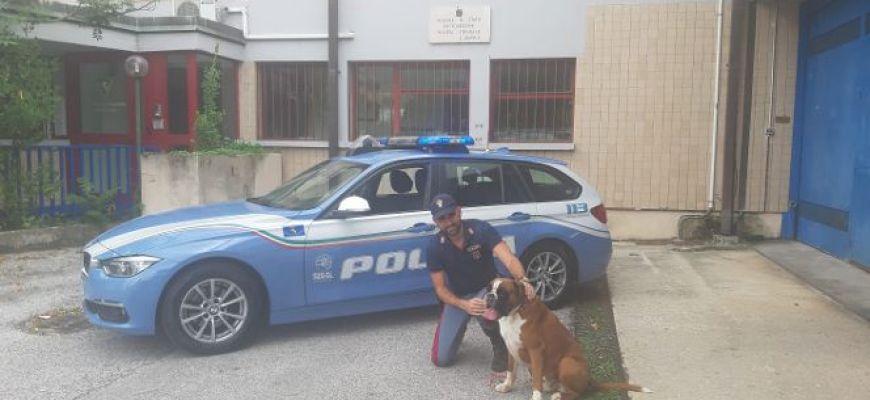 POLIZIA SALVA CANE ABBANDONATO SULL'AUTOSTRADA