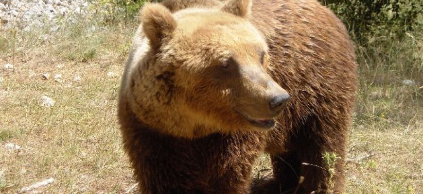 IL WWF LANCIA PRIMO CORSO DI FORMAZIONE