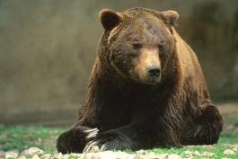 Panico a Villavallelonga per un orso entrato in un'abitazione