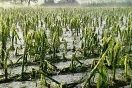 MALTEMPO-PER COLDIRETTI MLN DI DANNI ALL'AGRICOLTURA