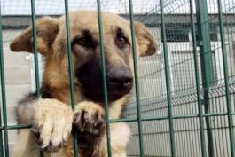 In città un asilo per i trovatelli a 4zampe e un cimitero per gli animali