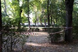 Alberi in piazza Torlonia: finita la prima fase dei controlli