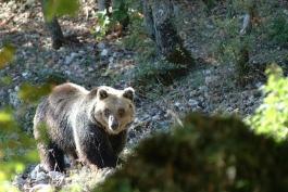 WWF CHIEDE PIU' RISPETTO PER GLI ANIMALI